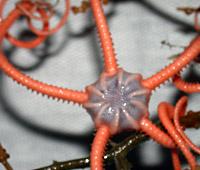 Seamount Biodiversity, Dispersal, and Endemism
